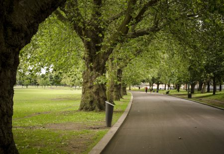 serene park with trees and road path